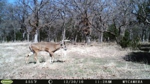 Moultrie Game Spy M-80 - Day time image quality