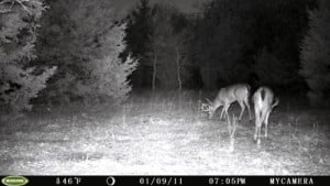 Moultrie Game Spy M-80 - Image Quality During Night