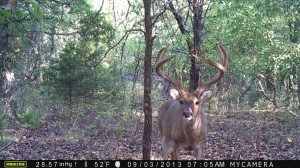 Moultrie M-990i image quality