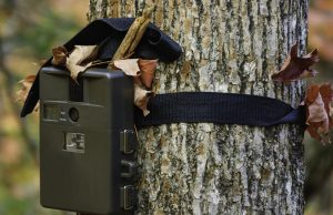 Best Trail Camera Reviews 2017 - Top Picks and Comparison