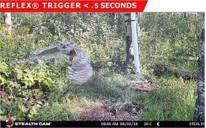 A Guide to No-Glow Infrared Trail Cameras