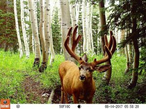 Best No-Glow Infrared Trail Cameras