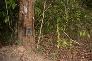Best Solar Trail Camera