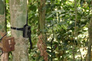 What is a Wireless Trail Camera