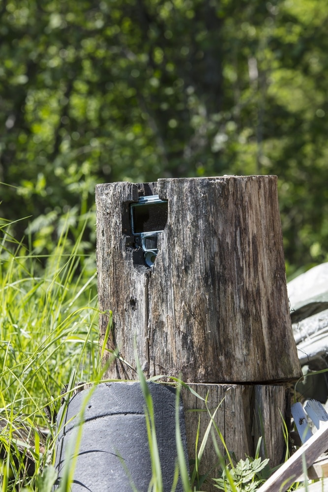 How to Hide a Trail Camera