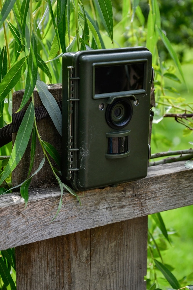 Why is My Trail Camera Not Taking Pictures