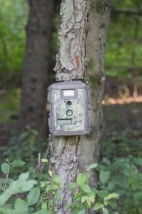 Different Types of Trail Cameras