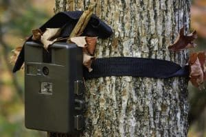 How Many Trail Cameras Should You Get