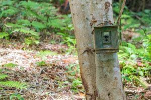 Security Boxed and Anti-Theft Cables for Trail Cameras